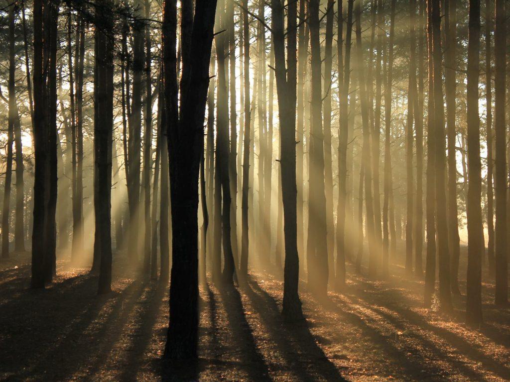 Nu vedem pădurea din cauza copacilor